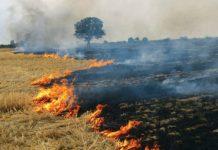 burn crop