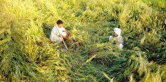 assess crop damage