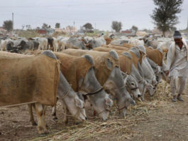 Rural development dept